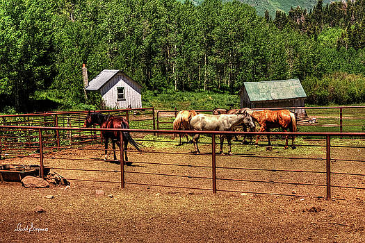 Nebo Horse Corral by David Simpson