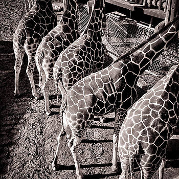 Neck and Neck by Sharon Wunder Photography