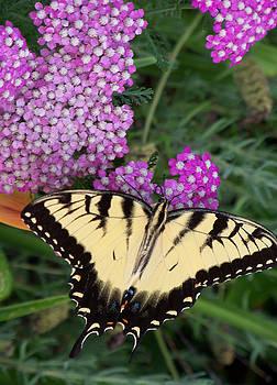 Nectar Break by Sandy Collier