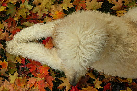 Nellie in Autumn Leaves by Joseph Duba