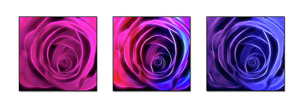 Neon Roses Triptych on White by Lesley Smitheringale