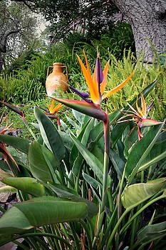 Joyce Dickens - Nepenthe Bird Of Paradise