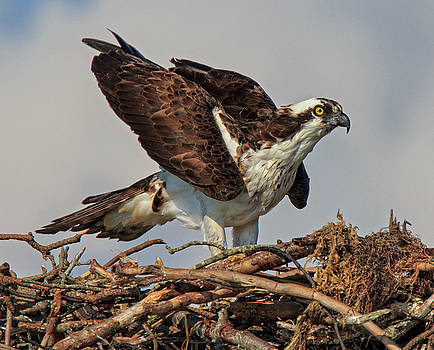 Nesting by Robert Pilkington