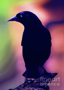 Nevermore by Arthur Miller