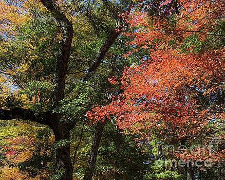 New England Colors by Cheryl Del Toro