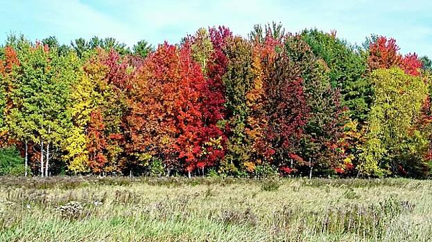 New Hampshire's True Colors by Joseph Hendrix
