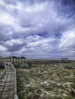 New Smyrna Beach Dunes by Rob Wilson