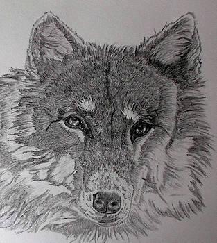 Wolf. by Cynthia Adams