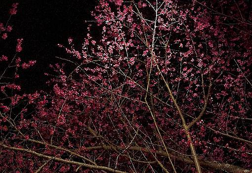 Night Blossoms by Heather S Huston