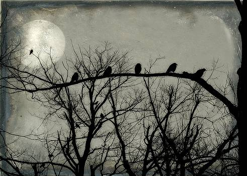Night Crows by Gothicrow Images