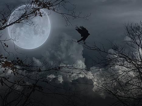 Gothicolors Donna Snyder - Night Fantasy