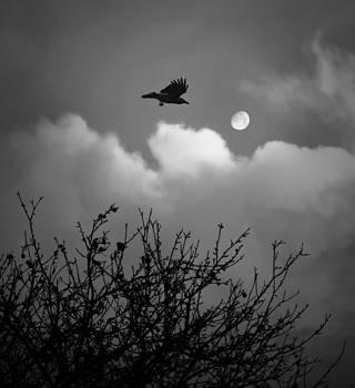 Night Flight by Vail Joy
