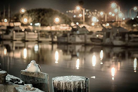 Night Gull by Scott  Wyatt