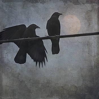 Night Watch  by Sally Banfill