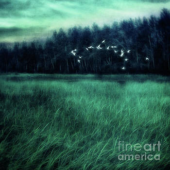 Nightbirds by Priska Wettstein