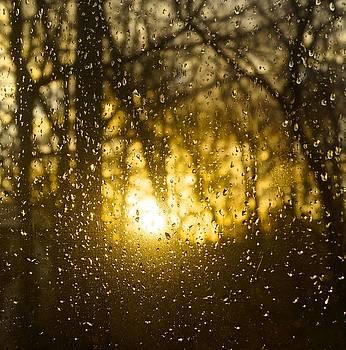 Nightlight by Wendell Lowe