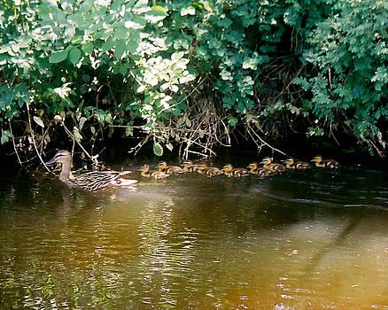 Nine Ducklings by D Winston
