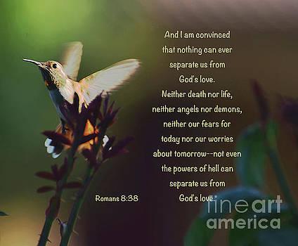 No Fear by Debby Pueschel
