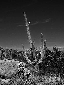 Noir Saguaro Cactus by Deniece Platt