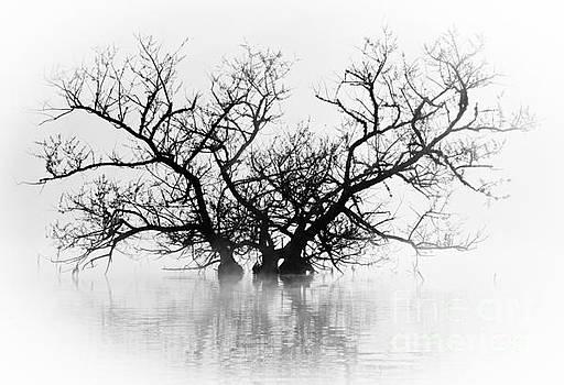 Norris Lake April 2015 5 by Douglas Stucky
