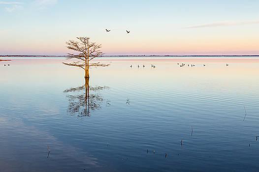 North Carolina Landscape Peaceful Lake at Dawn by Bill Swindaman