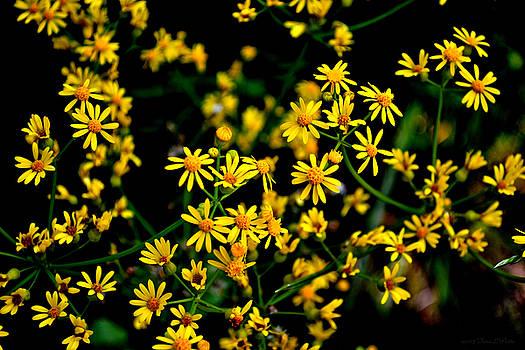 North Georgia Wildflowers by Tara Potts