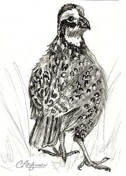 Northern bobwhite by Carol Allen Anfinsen