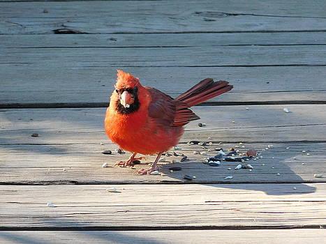 Northern Cardinal on Bridge Ohio by Nancy Spirakus