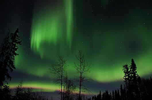 Northern Nights by Steve  Milner
