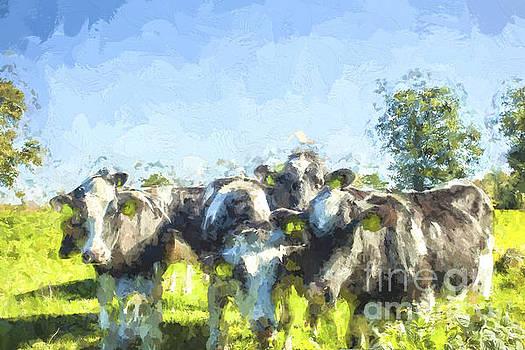 Patricia Hofmeester - Nosy cows