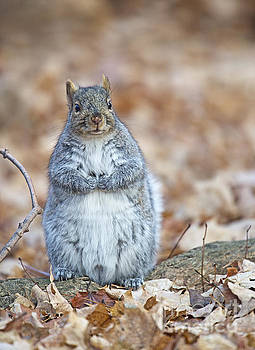 Not Fat Just Poofy... by Nina Stavlund