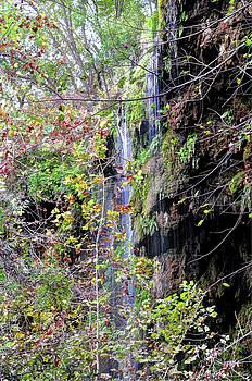 November at Gorman Falls by Savannah Gibbs