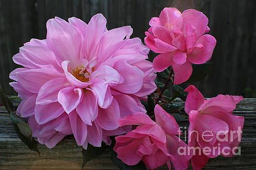 November's Gift - Dahlia and Roses by Dora Sofia Caputo Photographic Art and Design