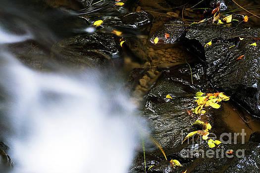 Charmian Vistaunet - Nuuanu Stream II