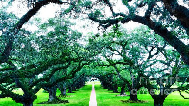 Oak Alley by Raymond Earley
