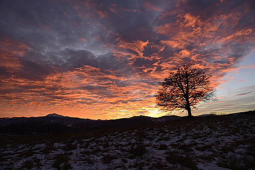Oak at sunset in winter by Andrea Gabrieli