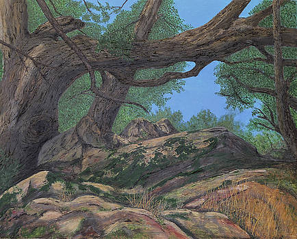 Oak Canopy and Moss by L J Oakes