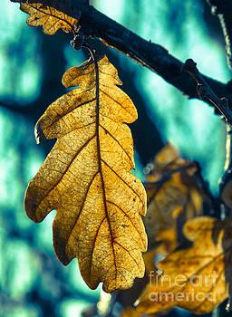 Oak leaf 2 by Kathryn Bell