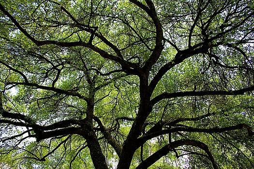Oak Of Life by Cynthia Guinn