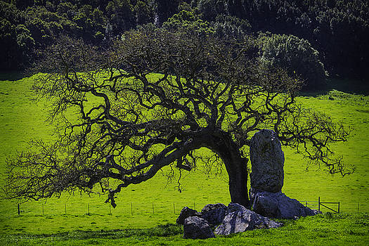 Oak Tree And Rock by Garry Gay