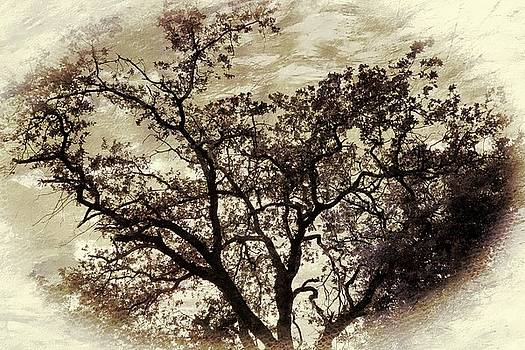 Oak tree by Athala Carole Bruckner