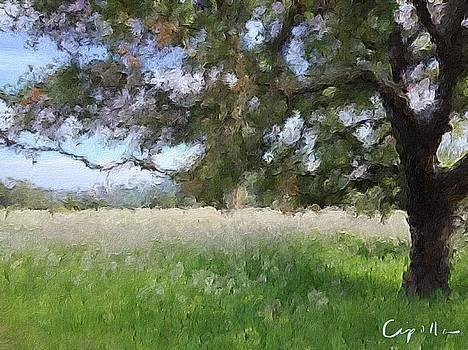 Oak Tree by Jan Cipolla