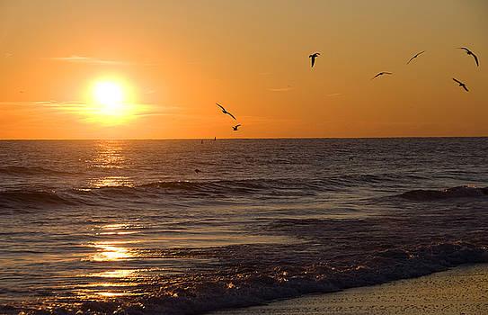 Ocean Sunset by Rob Byron