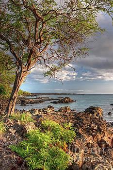 Ocean Tree by Bryan Keil