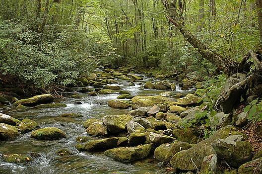 Oconaluftee River by Kathy Schumann