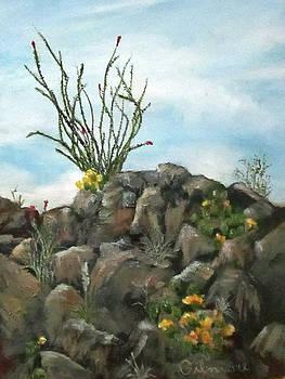 Ocotillo in Bloom by Roseann Gilmore