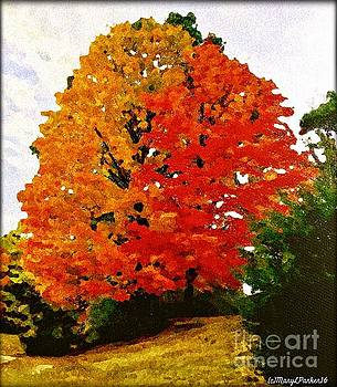October Colors by MaryLee Parker