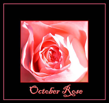 Nick Gustafson - October Rose