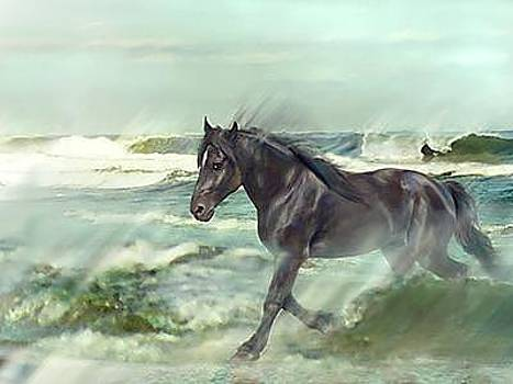 Of Wind And Sea- Black Stallion Running In Ocean by Connie Moses