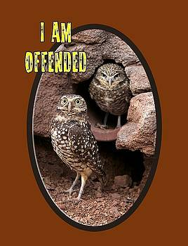 Offended Owl by Phyllis Denton